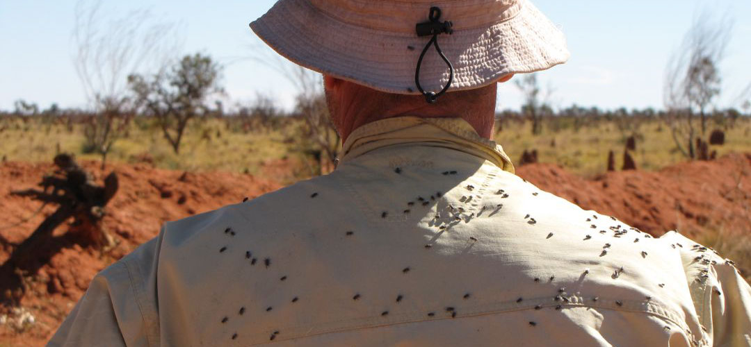 flies Tanami Track, Northern Territory