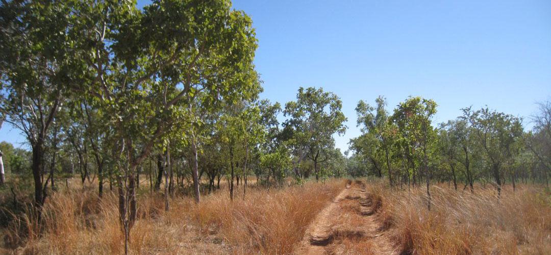 epic bike trek, Dingo Yard, Gregory National Park, Northern Territory